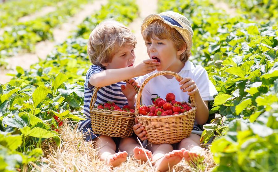 Dzieci jedzą truskawki