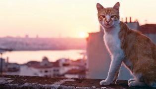 """Kadr z filmu """"Kedi - sekretne życie kotów"""""""
