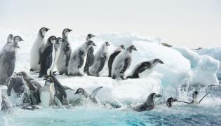 """""""Marsz pingwinów: Przygoda na końcu świata"""" w kinach od 8 września 2017"""