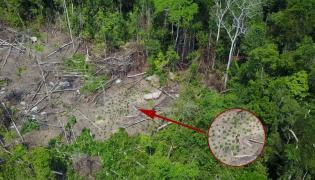 Nieznane plemię odkryte w amazońskiej dżungli