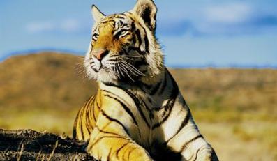 Każdy może chronić dziką przyrodę