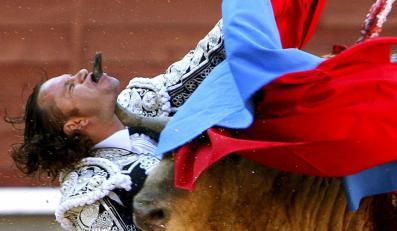 Byk zaatakował hiszpańskiego torreadora Julio Aparicio