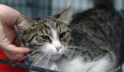 Bezdomny kot ocalał dzięki interwencji premiera Tuska