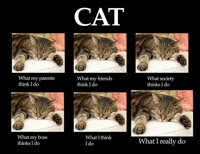 W światowy Dzień Kota Koty Zawładnęły Internetem Memy Zdjęcie 9