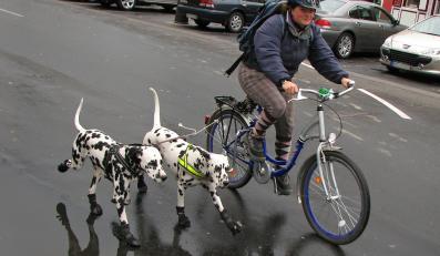 W Krakowie można wypożyczyć rower