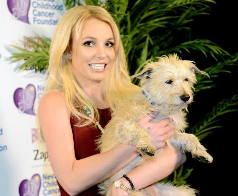 Ile Britney Spears wydaje na psy?
